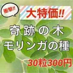 """Thumbnail of """"【スーパーフードの種子】奇跡の木 モリンガの種30粒 ハーブ タネ 美容健康"""""""