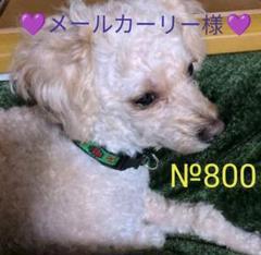 "Thumbnail of ""№800 ペッツテクト 日本製 小型犬 3〜6㌔ 6本 6ヶ月 ノミ・マダニ・蚊"""