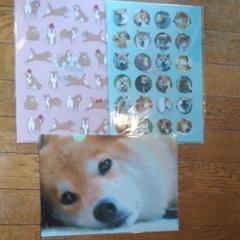 "Thumbnail of ""新品 柴犬まる クリアファイル"""