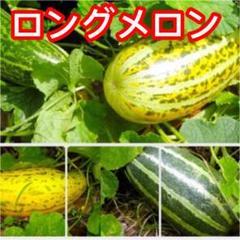 "Thumbnail of ""ベトナム ロングメロン 12粒"""