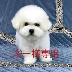 """Thumbnail of """"座椅子"""""""