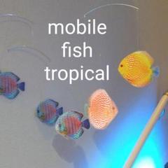 "Thumbnail of ""ディスカス 熱帯魚 モビール 綺麗な魚 幸運  水槽"""