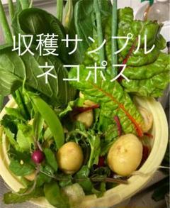 "Thumbnail of ""野菜セット詰め合わせ ネコポス 無農薬"""