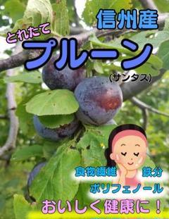 "Thumbnail of ""今が旬!信州産★生プルーン.サンタス"""