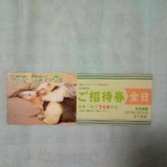 """Thumbnail of """"伊豆シャボテン動物公園  全日招待券1枚"""""""