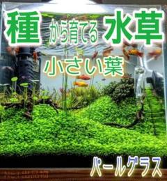 """Thumbnail of """"最安値!プランツシード 種から育てる水草  小さい葉10g"""""""