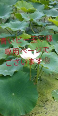 """Thumbnail of """"レンコン れんこん 農家直送"""""""