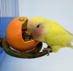 "Thumbnail of ""鳥用品 餌入れ  フードボウル 小鳥 小動物  カボチャ1個"""