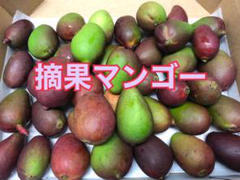 "Thumbnail of ""沖縄産マンゴーの摘果マンゴー ☆1.2キロ(30g前後)"""