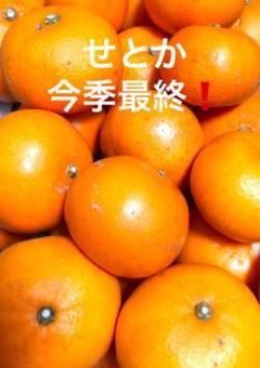 """Thumbnail of """"今季最終❗️愛媛産完熟せとかS.Mサイズ1㌔以上1.2㌔❗️プラス1個❗️"""""""