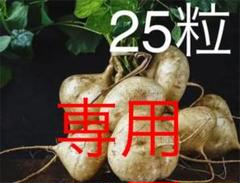 "Thumbnail of ""25粒 ベトナムのヒカマ Jicama BengKuang YamBean 豆薯"""