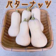"Thumbnail of ""バターナッツかぼちゃ 5個"""