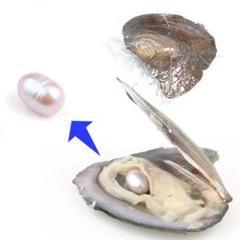 "Thumbnail of ""【1粒売り】牡蠣からパールを採掘しよう! パープル pea_oys_01_p"""