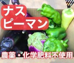 "Thumbnail of ""[本日出荷!]ナスピーマン 60サイズ 農薬 化学肥料不使用"""