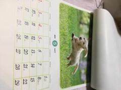"""Thumbnail of """"買い忘れ の 方向き ちょっと大きいかも 2021 犬 猫 写真 カレンダー"""""""