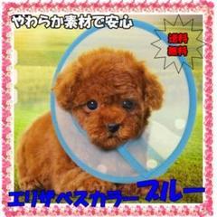 """Thumbnail of """"ブルー エリザベスカラー S 布タイプ 犬 猫 術後の舐め防止"""""""