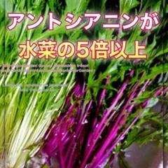 """Thumbnail of """"20粒 紫みずな【野放し・手間いらず】タネ"""""""