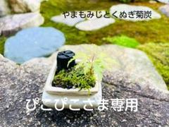 """Thumbnail of """"《ぴこぴこさま専用》やまもみじとくぬぎ菊炭のミニ盆栽 敬老の日"""""""
