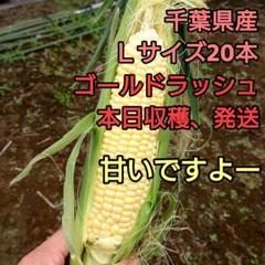 "Thumbnail of ""千葉県産Lサイズ ゴールドラッシュ"""