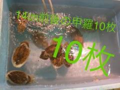 "Thumbnail of ""明石産いかの甲羅 カルトボーン カットルボーン 10枚"""