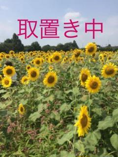 "Thumbnail of ""ミネトンカ モカシン サンダーバード 白  25〜25.5 サイズ8.5"""