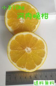 "Thumbnail of ""愛南ゴールド小玉10kg【訳あり】"""