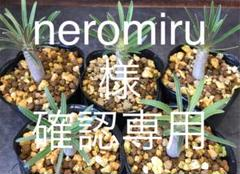 "Thumbnail of ""neromiru 様 確認専用です"""