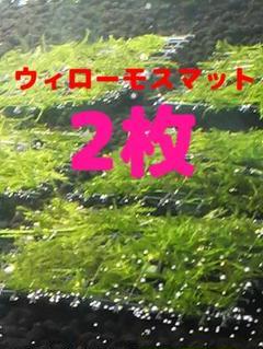"""Thumbnail of """"①【超安値】★水草★ウィローモス★マット(5cm×5cm)★ 2枚★アクアリウム"""""""
