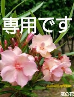 """Thumbnail of """"kei cosoms 様専用✨楽ちんワイドな半パンツ  【96】"""""""