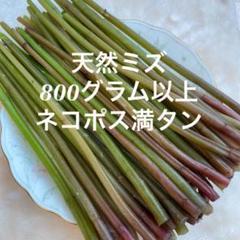 "Thumbnail of ""山形県産 天然 山菜ミズ 赤ミズ 800グラム以上  【8月2日発送】"""