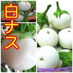 """Thumbnail of """"ベトナム 白ナス 45粒"""""""