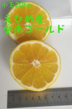 "Thumbnail of ""愛南ゴールド小玉20kg【訳あり】"""
