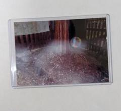 "Thumbnail of ""光輝く虹色と白色の光の玉を持つ自然龍"""