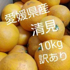"Thumbnail of ""愛媛県島育ち   清見   10kg   訳あり家庭用"""