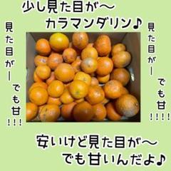"Thumbnail of ""少し見た目が 春みかん カラマンダリン 2キロ"""