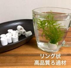 "Thumbnail of ""メダカ 水草 リングフィルター12個《ホワイト》観賞魚用品 アクアリウム"""