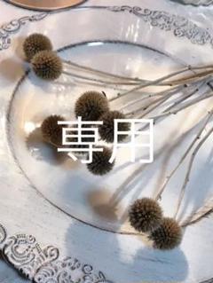 """Thumbnail of """"瑠璃玉ベッチーズブルードライフラワー❣️"""""""