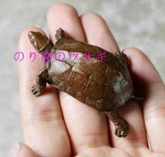 "Thumbnail of ""亀の置物 銅製 茶道具 縁起物U401"""