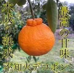 "Thumbnail of ""和歌山県 有田産 デコポン 不知火 3kg 家庭用みかん"""