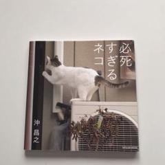 "Thumbnail of ""必死すぎるネコ"""