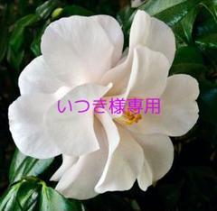 "Thumbnail of ""いつき様専用"""