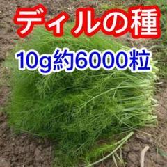 """Thumbnail of """"ベトナム ディル 袋込み10g 約6000粒"""""""