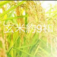 "Thumbnail of ""お米約8キロ"""