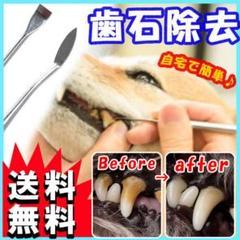 "Thumbnail of ""犬用 歯の汚れ取りスケーラー スケラー 先細&平型 歯石取り ペット 犬 猫 S"""
