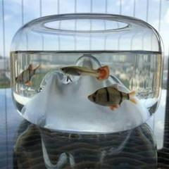 "Thumbnail of ""厚手の円形ガラスのアイデア雪の山の孔雀ミニ魚の水槽のデスクデスク魚の水槽のテ8"""