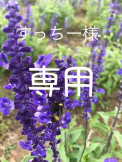 """Thumbnail of """"3D立体ポーチ セクシー ice silk  ビキニ  ハーフバック #553"""""""