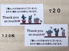 "Thumbnail of ""サンキューシール*T20 多肉植物 120枚"""