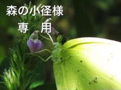 "Thumbnail of ""希少最高級油烟墨セット「椿油烟墨、桐油烟墨」"""
