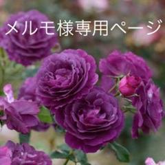 "Thumbnail of ""バラ 挿し木苗 ミステリュ's"""