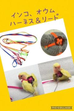 """Thumbnail of """"鳥用のハーネス&リード  黄緑色 新品未使用"""""""